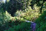 Martha_Falls_021_06212021 - Traversing a small bridge over a side creek on the Wonderland Trail en route to Martha Falls
