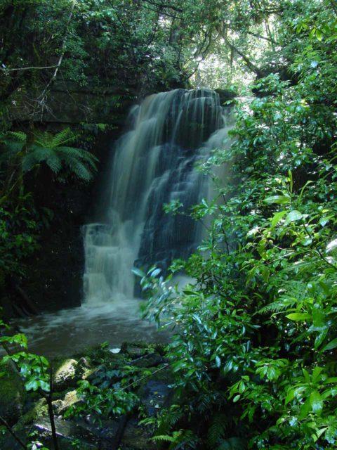 Matai_Falls_006_12012004 - Horseshoe Falls