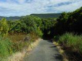 Matai_Falls_026_12012004 - The track descending into the bush for Matai and Horseshoe Falls