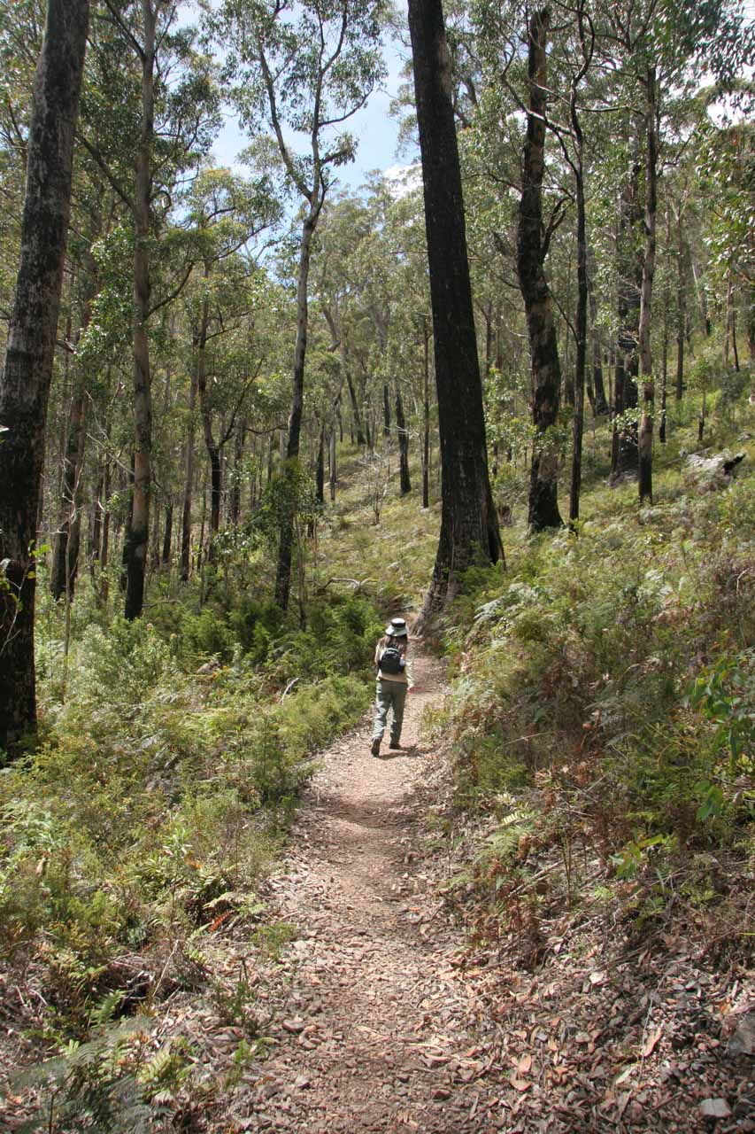 Julie on the track for Mathinna Falls