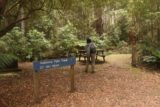 Mathinna_Falls_17_005_11242017 - Julie walking past the sign and picnic table to get onto the Mathinna Falls Track
