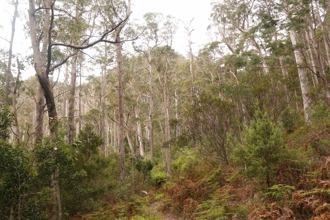 Continuing on the primitive Mathinna Falls Track