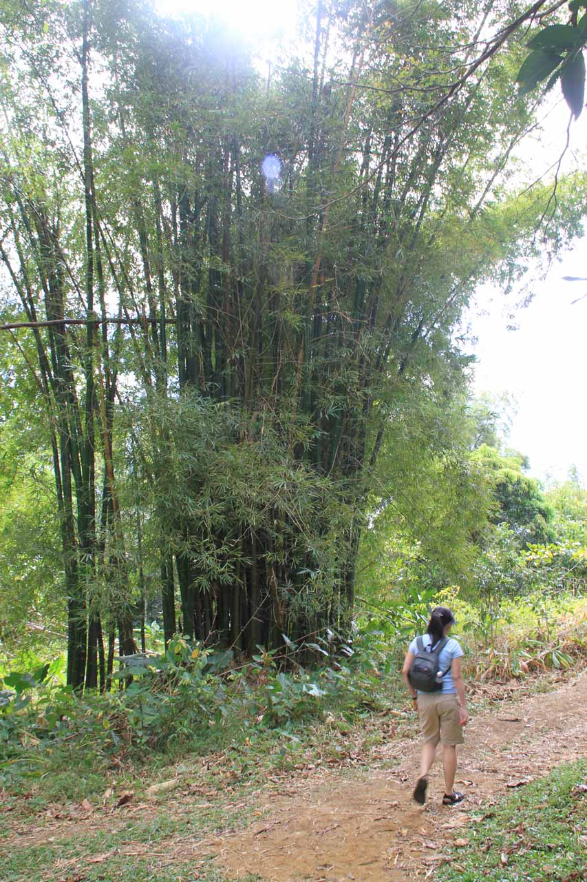 Julie walking by a bamboo stalk on the way back