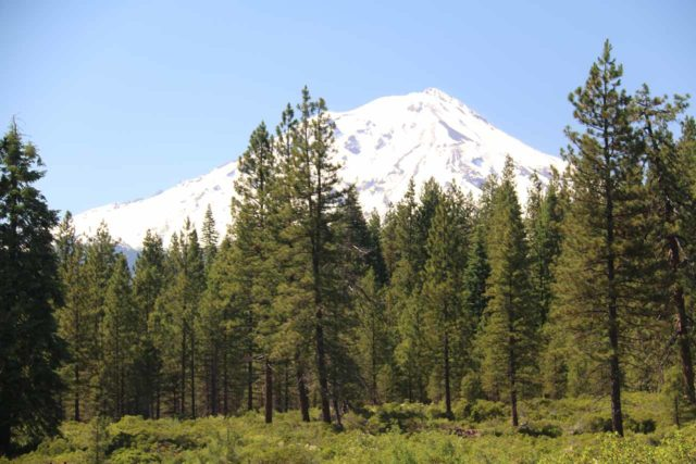 McCloud_Falls_222_06192016 - This was the view of the southern slopes of Mt Shasta from the parking lot for the Middle McCloud Falls. This view turned out to be better than the one we got from the trail