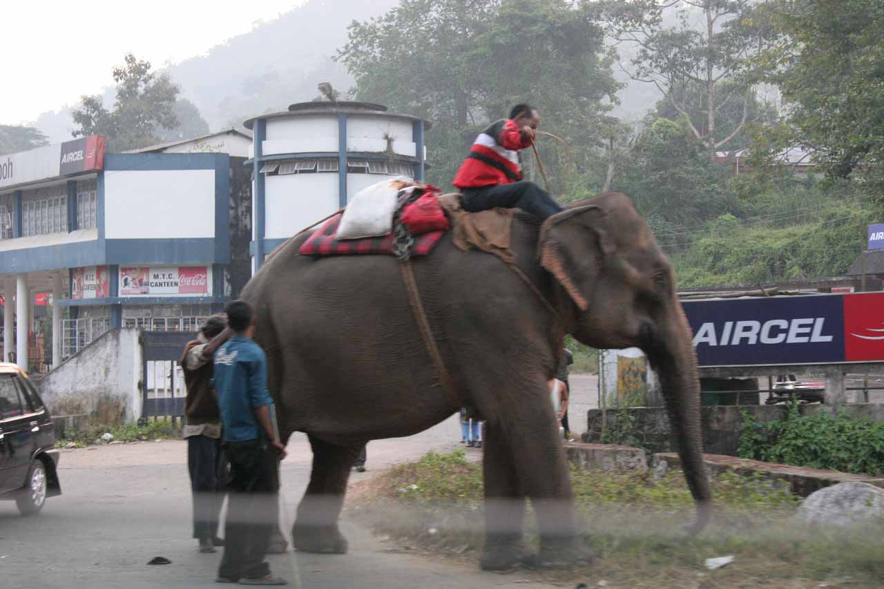 Speaking of elephants, we saw this domesticated one off the side of the road as we were driven between Guwahati and Shillong