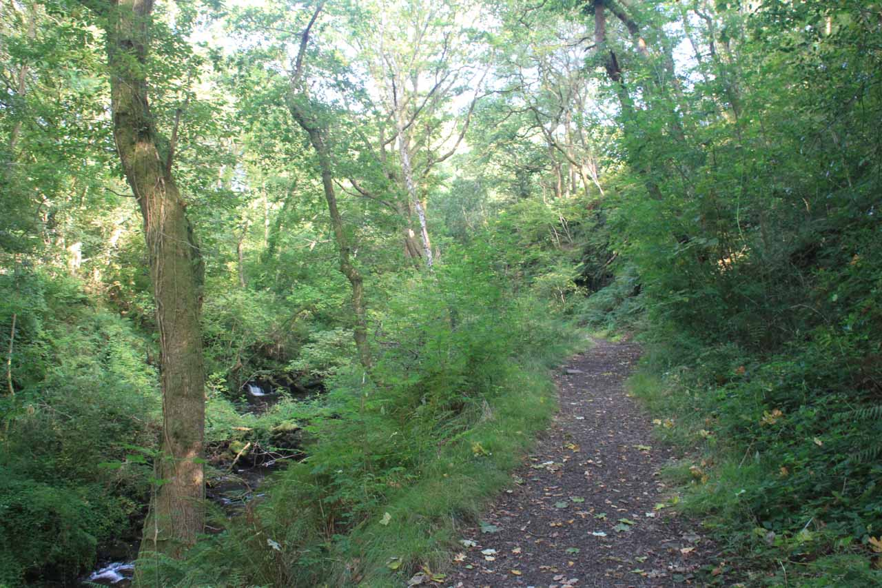 The trail to the falls running along Melincourt Brook