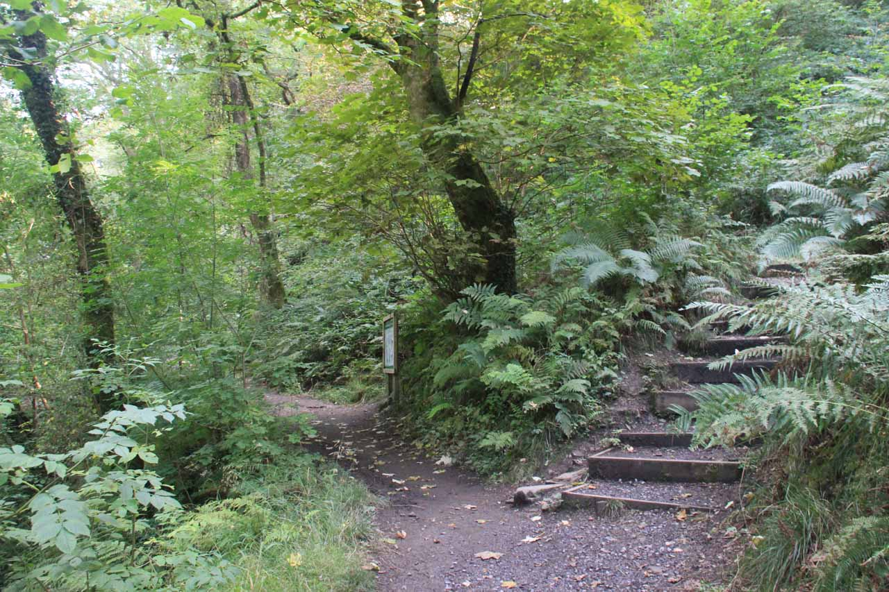 This was the trail junction in the middle of the hike where the path on the right went up towards the Waterfall Road while the path on the left went past a sign about the falls then ultimately to the falls itself
