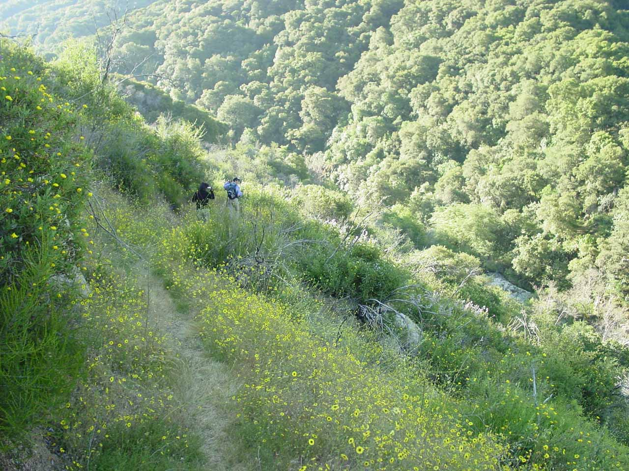 Mom and Dad on the scrambling path amidst wildflowers in search of a closer look at Middle Fork Tule River Falls