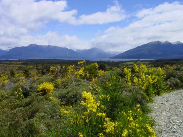 Milford_080_11242004 - This view towards Lake Te Anau over some blooming wildflowers was just north of the town of Te Anau along the Milford Highway