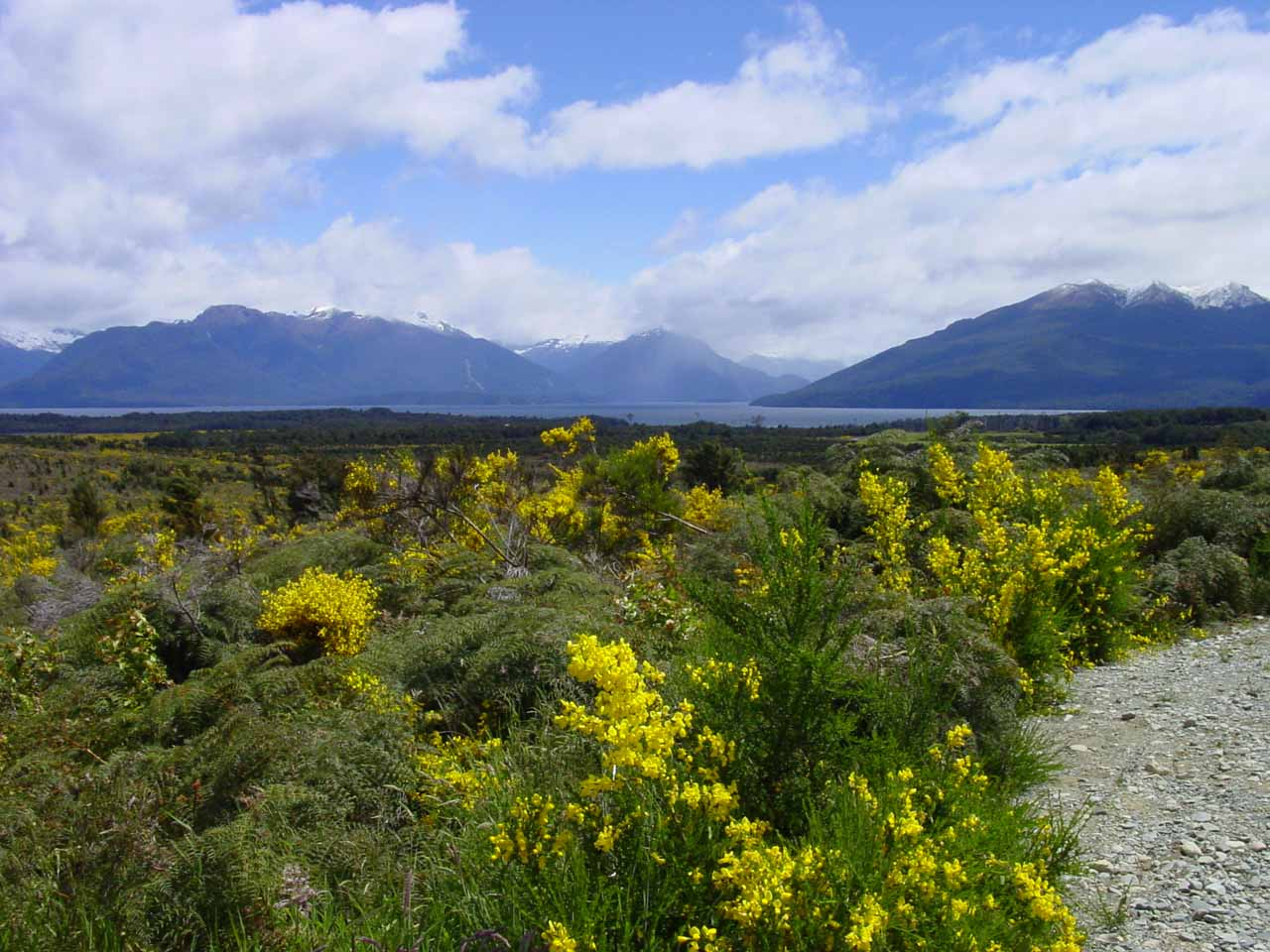 This view towards Lake Te Anau over some blooming wildflowers was just north of the town of Te Anau along the Milford Highway