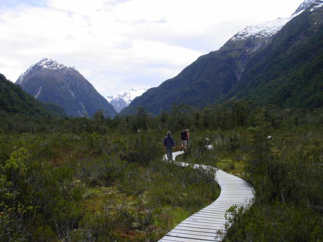 Milford_Track_day2_016_11272004 - This was the Wetlands Walk near the Clinton Hut, which independent trampers got to see on Day 1 while we got to see this on Day 2