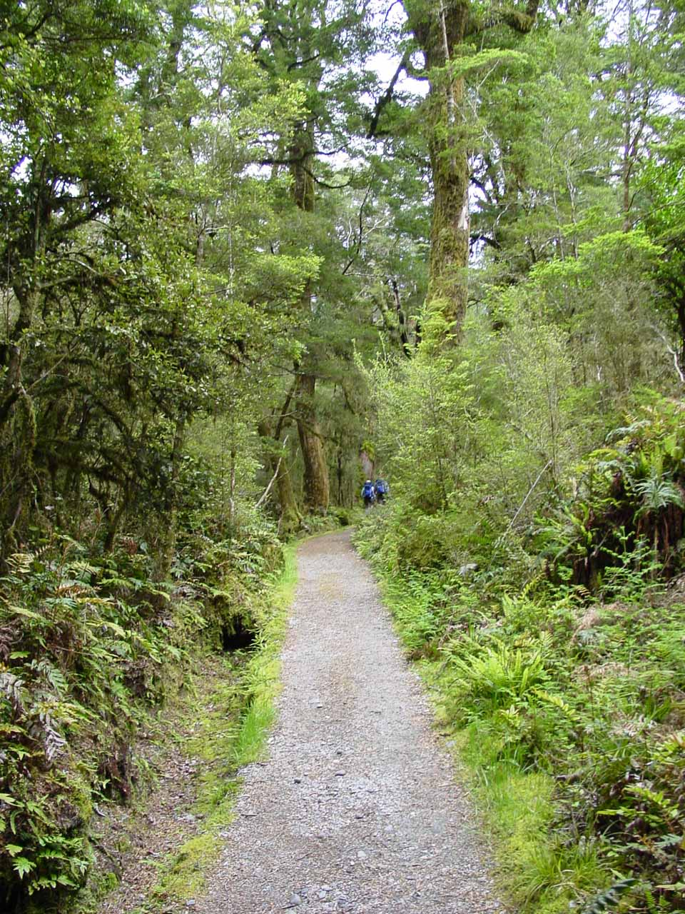 On the lush Milford Track