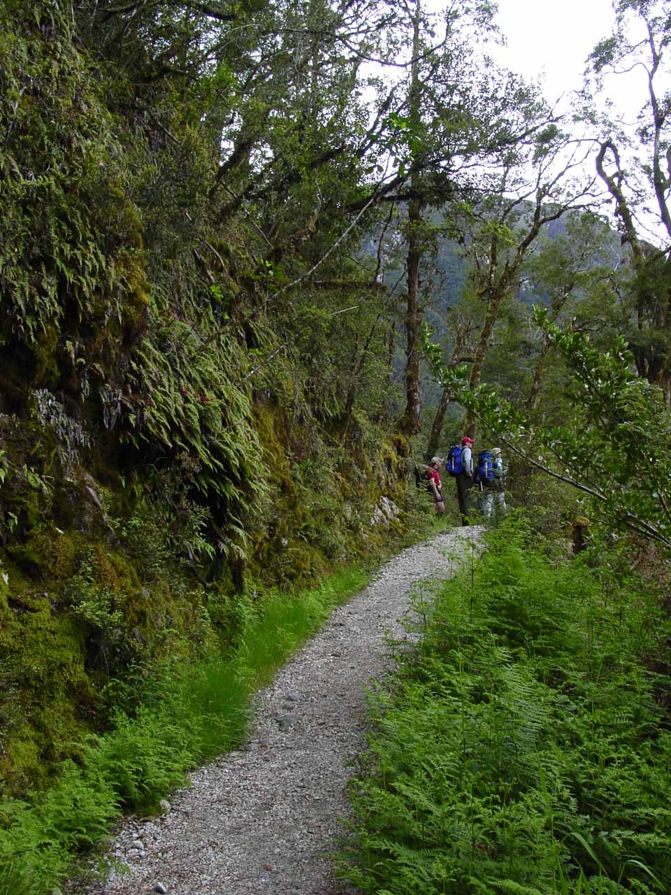 People up ahead on the Milford Track