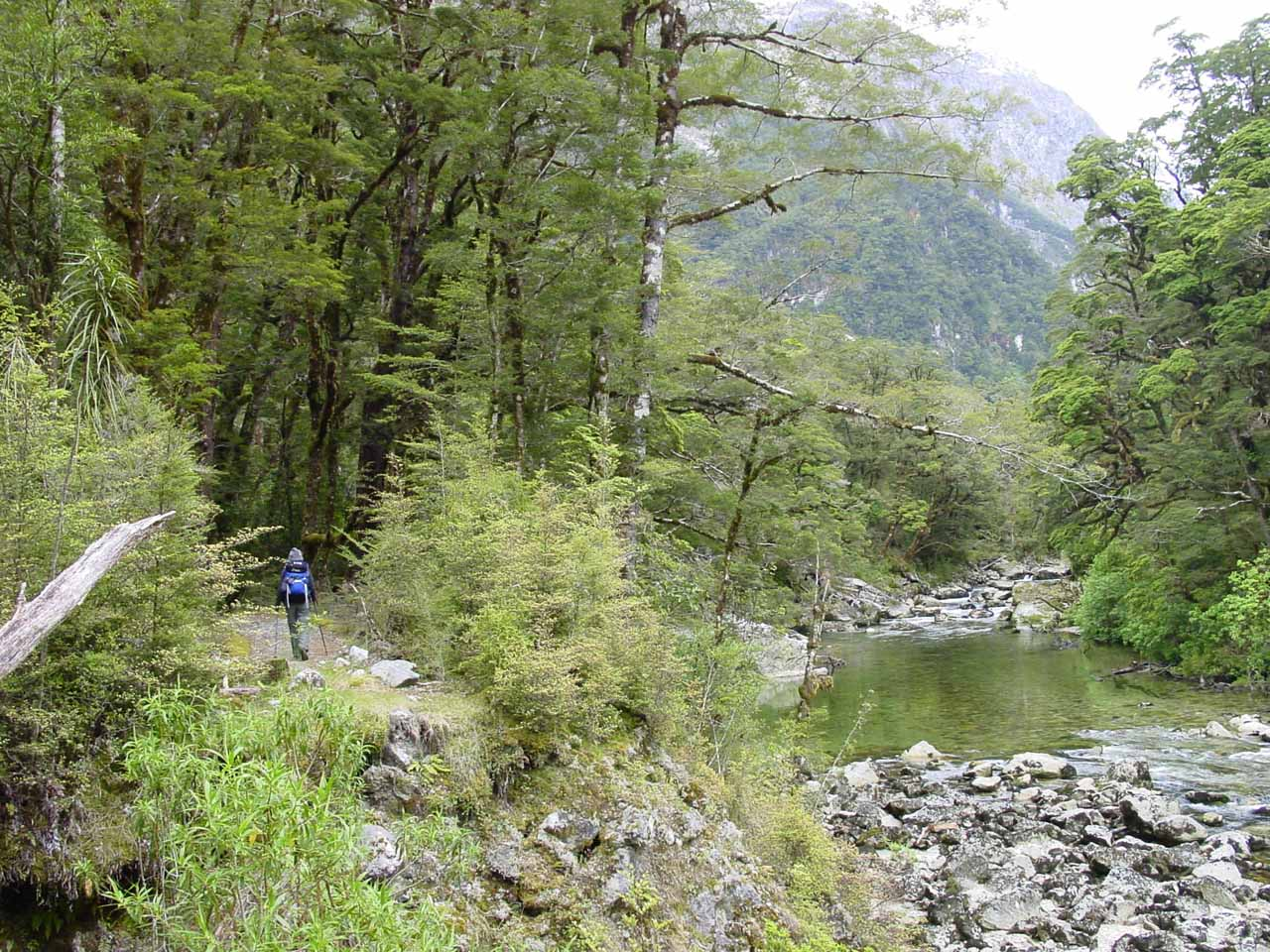 Julie walking along the Clinton River on the Milford Track
