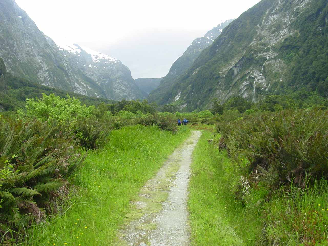 The Milford Track leading to Mackinnon Pass, where we were headed tomorrow