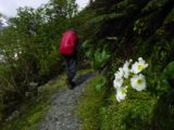 Milford_Track_day3_033_11282004 - Some blooming white flowers alongside the ascent up to Mackinnon Pass as seen on day 3 of the Milford Track