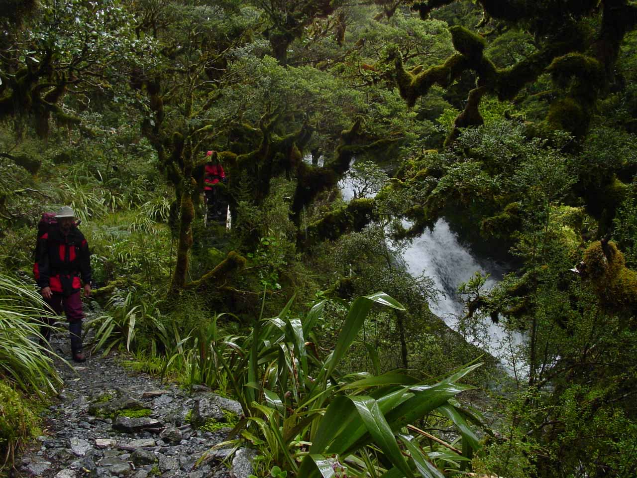Looking back at part of the Anderson Cascades as the Milford Track went alongside it