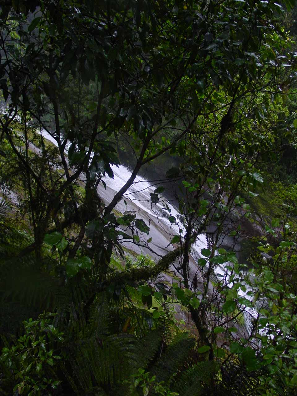Profile view of Lindsay Falls through the foliage