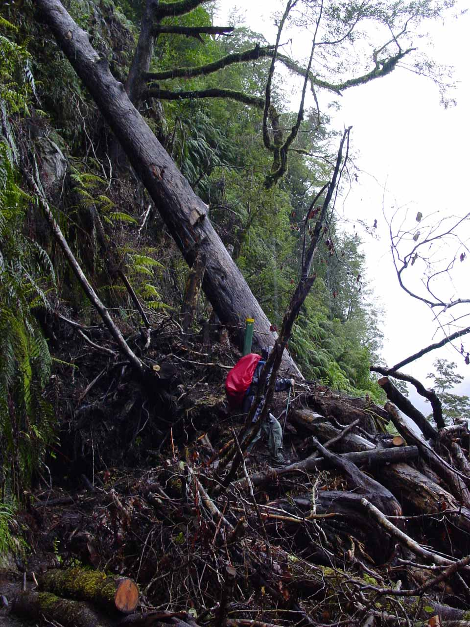 Julie negotiating a tricky fallen tree section of the Milford Track