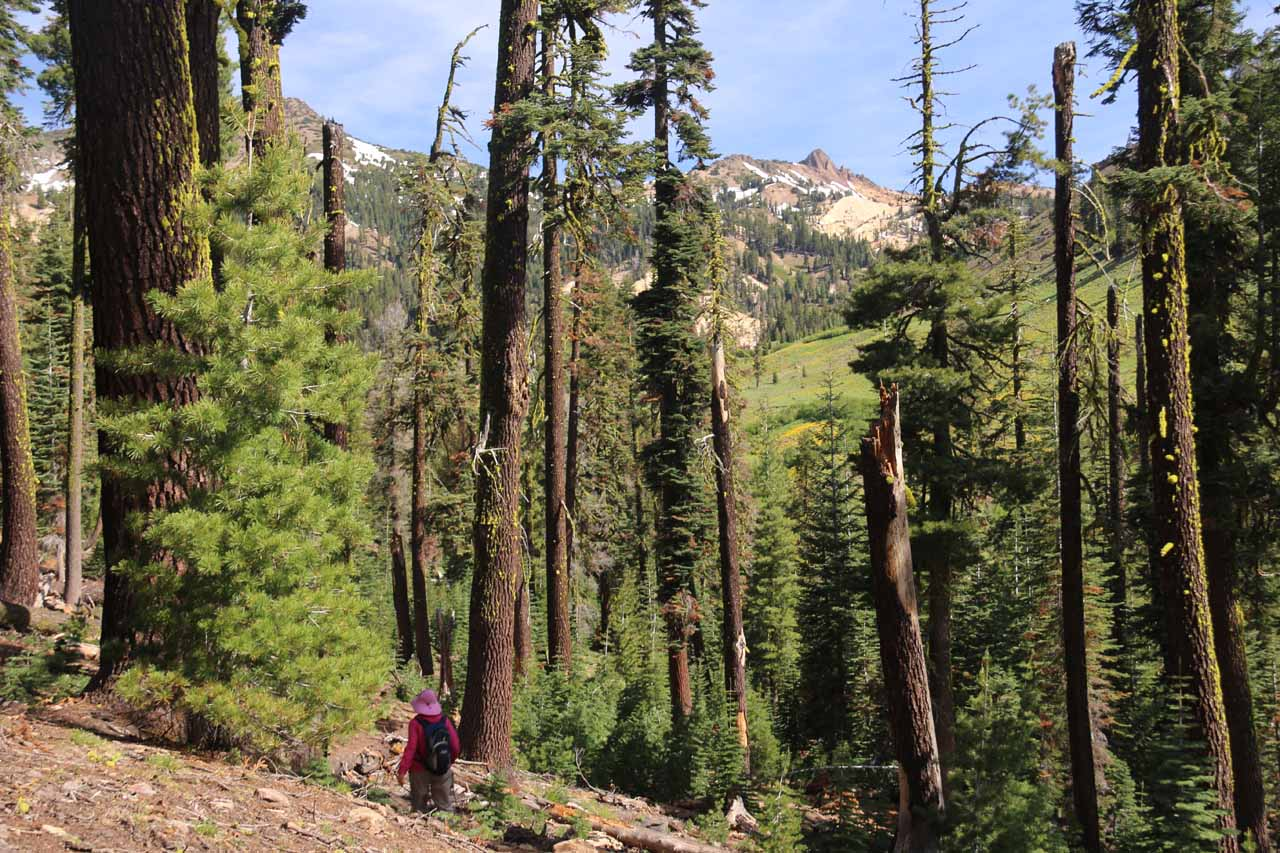 Mom on the initial descent amongst some trees with hints of volcanic peaks in the distance