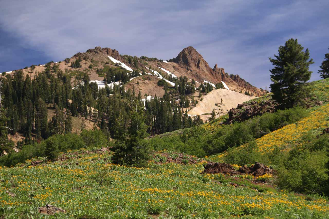 One of the most attractive parts of the Mill Creek Falls Trail was this open space where colorful mats of wildflowers were fronting some jagged and colorful volcanic peaks