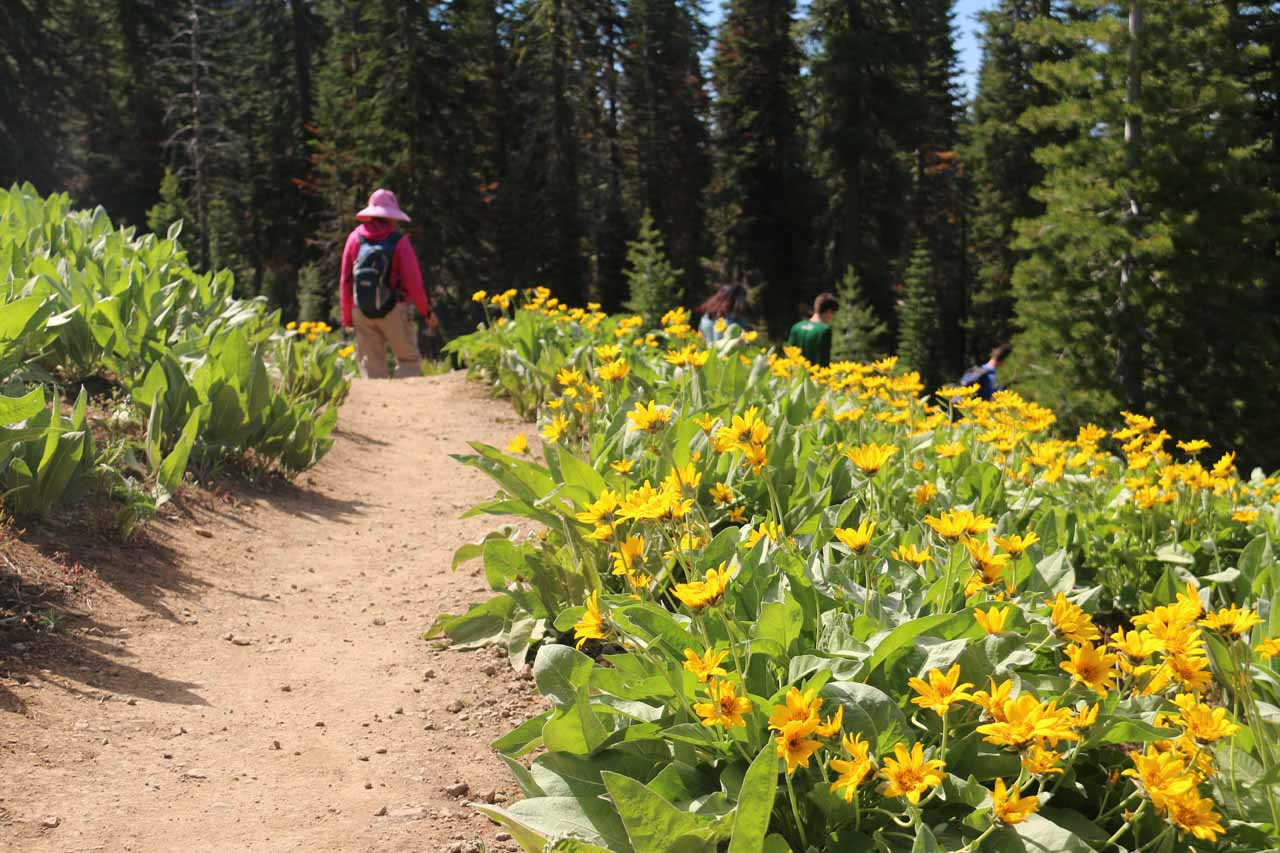After the bridge, Mom and I passed by lovely mats of blooming wildflowers really adding color to this section of the hike