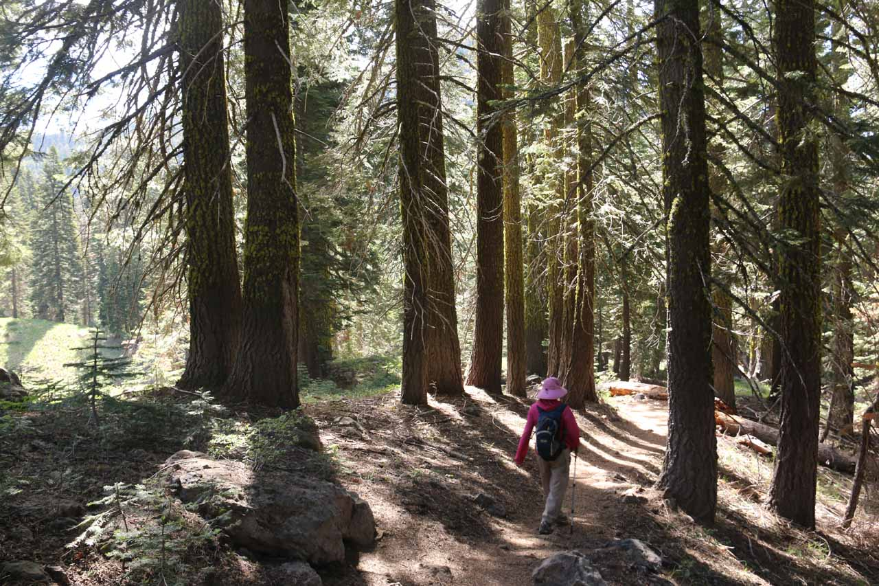 In addition to undulating, the trail also went in and out of groves of tall trees providing some degree of shade from the sun