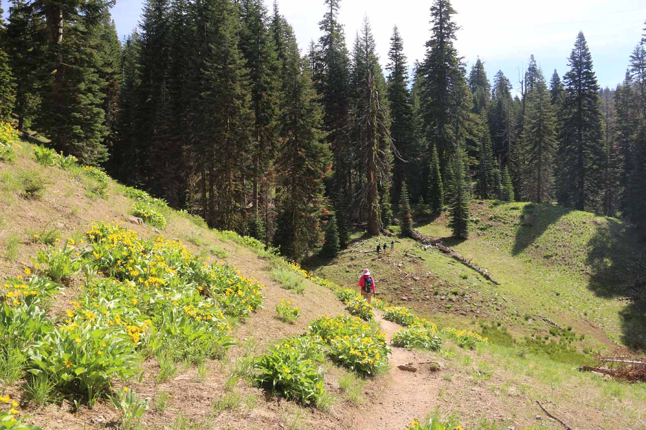 This was another undulating part where we briefly descended after passing by another scenic stretch with lots of wildflowers