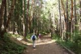 Mill_Creek_Falls_prospect_008_07152016 - This was where the wide trail meandered amongst some attractive trees and seemed wide enough to accommodate 4wd vehicles at one point
