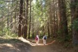 Mill_Creek_Falls_prospect_013_07152016 - Mom and Dad walking together on the wide trail to the waterfalls while flanked by more tall trees