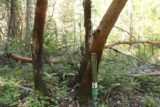 Mill_Creek_Falls_prospect_037_07152016 - We noticed a handful of these steel pipes with white and green stripes on them as well as etchings of the names of the trees that each pipe had fronted