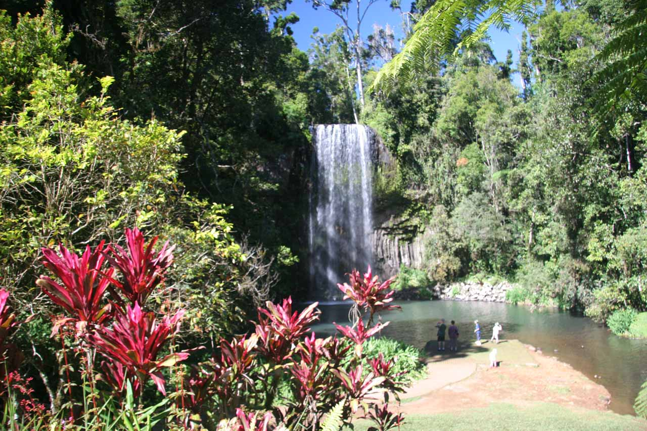 Our first look at Millaa Millaa Falls.  Notice the morning shadows coming in from the left