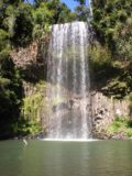 Millaa_Millaa_Falls_018_jx_05172008 - Closer look at Millaa Millaa Falls.  Notice the basalt columns in the underlying cliff demonstrating the hard rock layer required for waterfall formation
