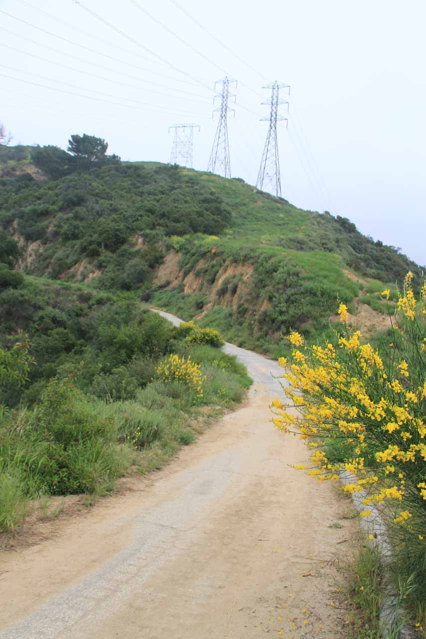 Walking along a ridge flanked by wildflowers while beneath power lines