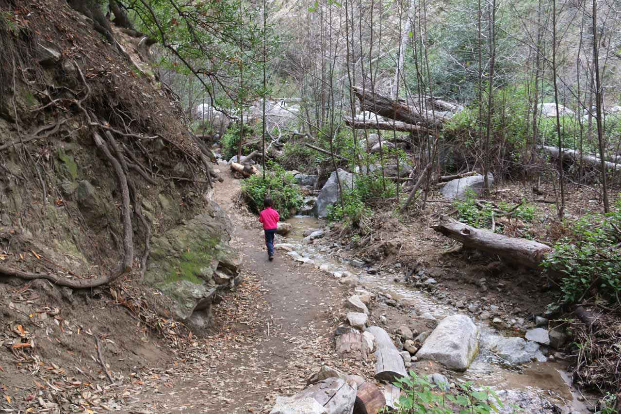Tahia walking on the waterfall trail, which skirted alongside Millard Creek in this stretch shown here.  I can see in times of flood, the water could very well get onto the trail itself here