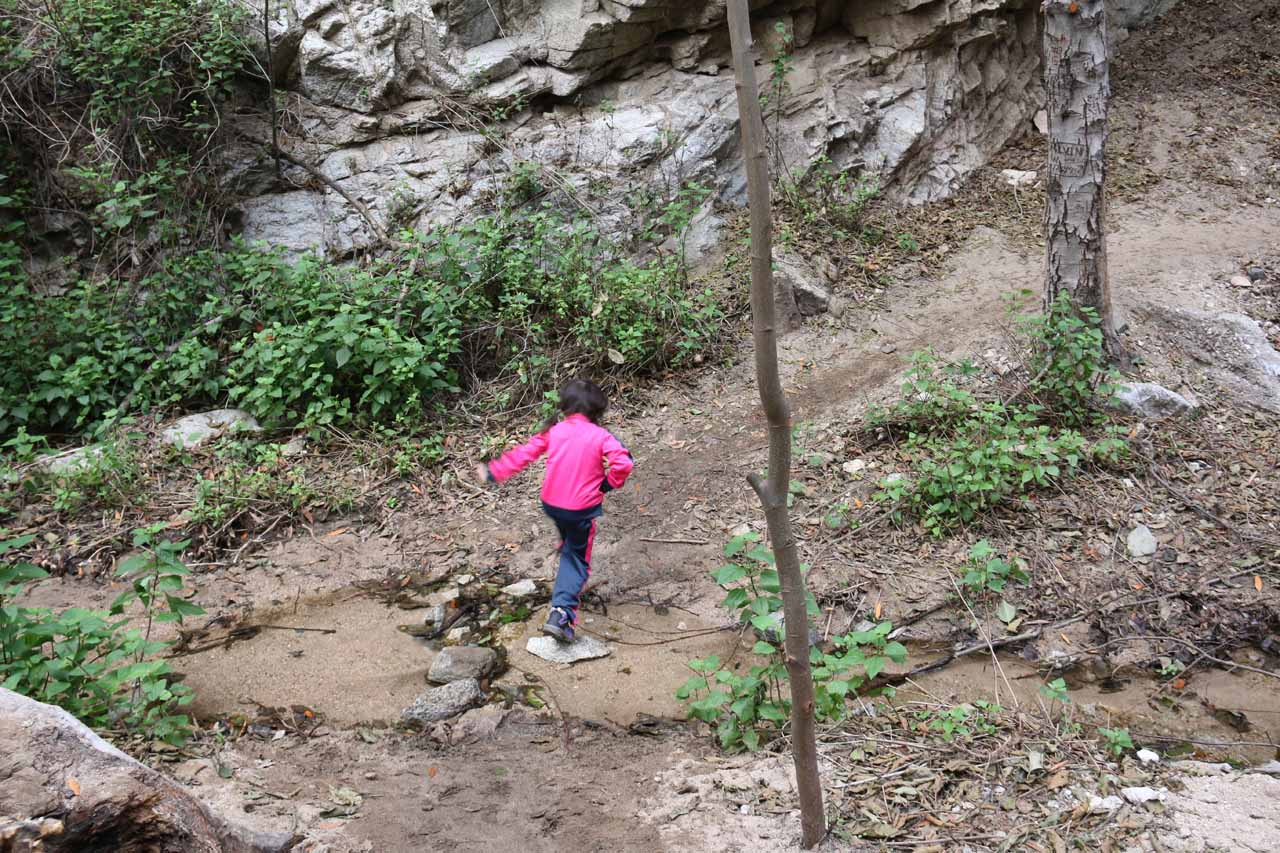 Tahia doing another crossing of Millard Creek