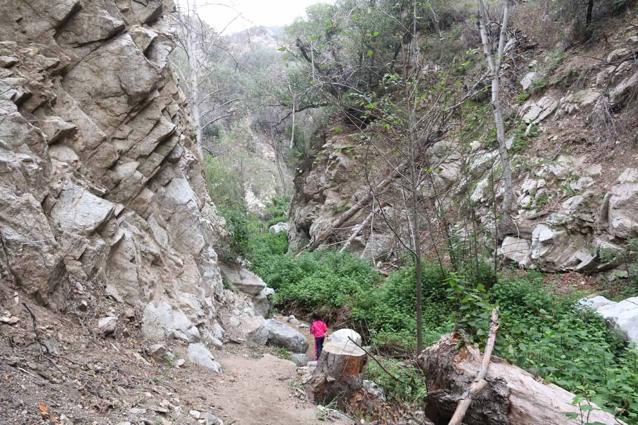 The walls of Millard Canyon were getting increasingly rockier the deeper we went