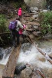 Millard_Falls_17_022_02192017 - Mom and Tahia traversing this log-assisted crossing of Millard Creek in high flow