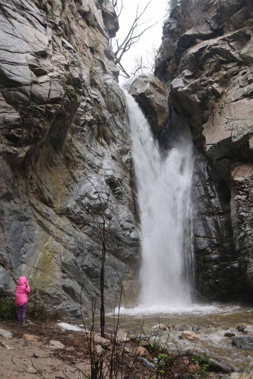 Tahia getting blasted by the spray from a swollen Millard Falls during an unusually wet Winter season in the Southland