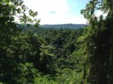 Millenium_Cave_078_jx_11232014 - Looking across the thick jungle after having successfully climbed out of the Sarakata River gorge at the end of our Millennium Cave Tour