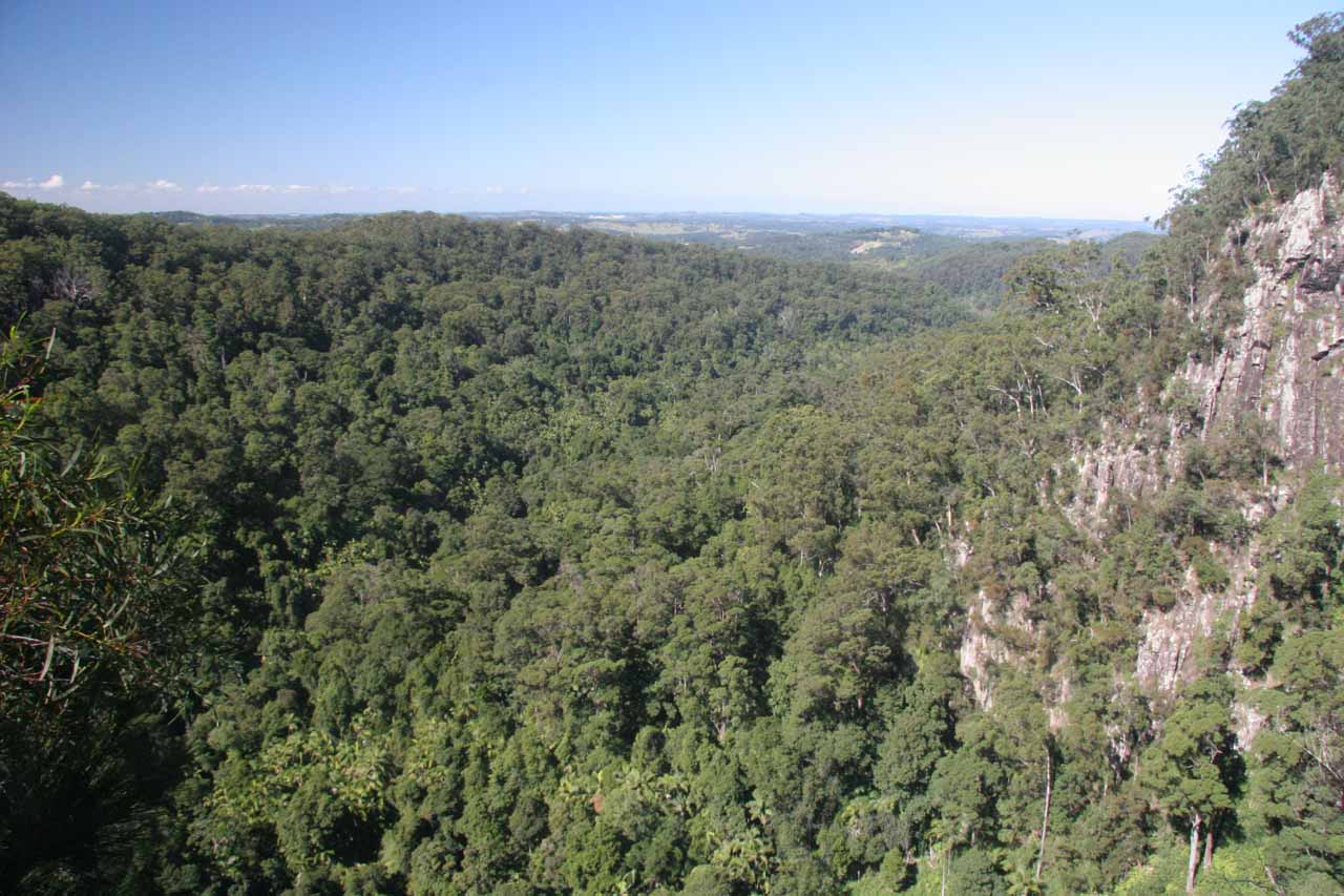 This was the view of the panorama of the Bangalow Palm rainforest from the top of Minyon Falls