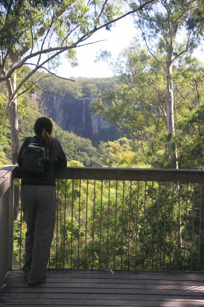 Julie checks out Minyon Falls from a lookout near Minyon Grass