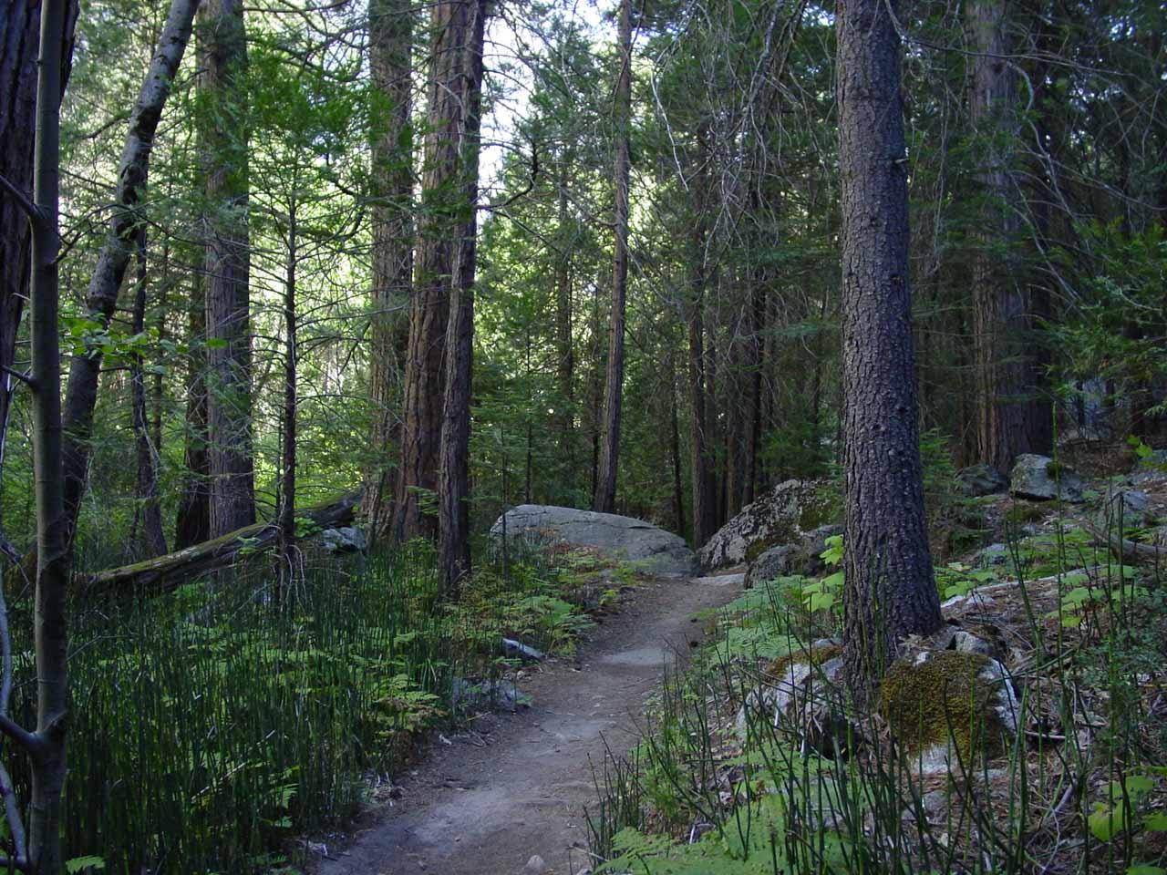 The forest got denser the further I went