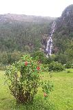 Mo_I_Modalen_059_06272019 - Some flowers blooming in the open lawn area on the south side of Mo i Modalen with Kvernhusfossen in the background