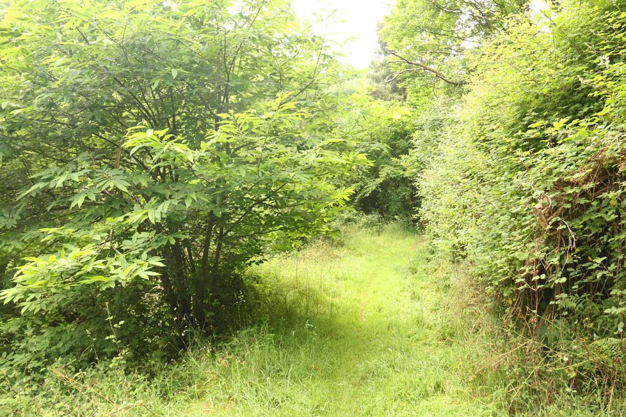 The overgrown trail to Salto do Coro