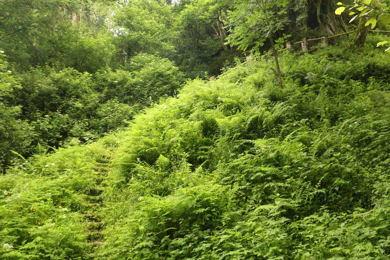 The final climb up to Salto do Coro required walking on these overgrown and wet stone steps