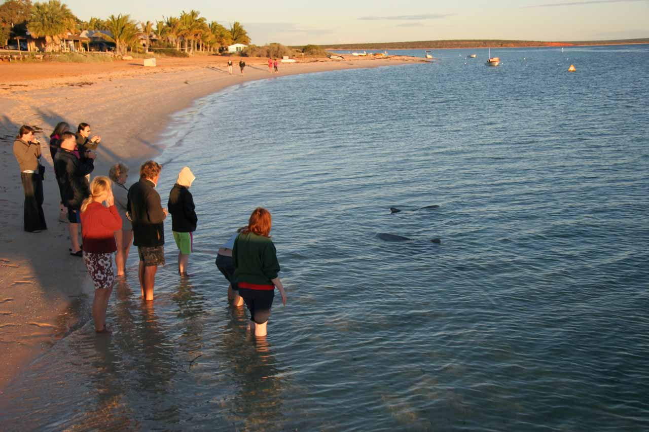 Further to the south of Ningaloo Reef was the quaint coastal town of Monkey Mia, which might be most known for a pod of dolphins that reliably show up in the mornings as they did when we were there