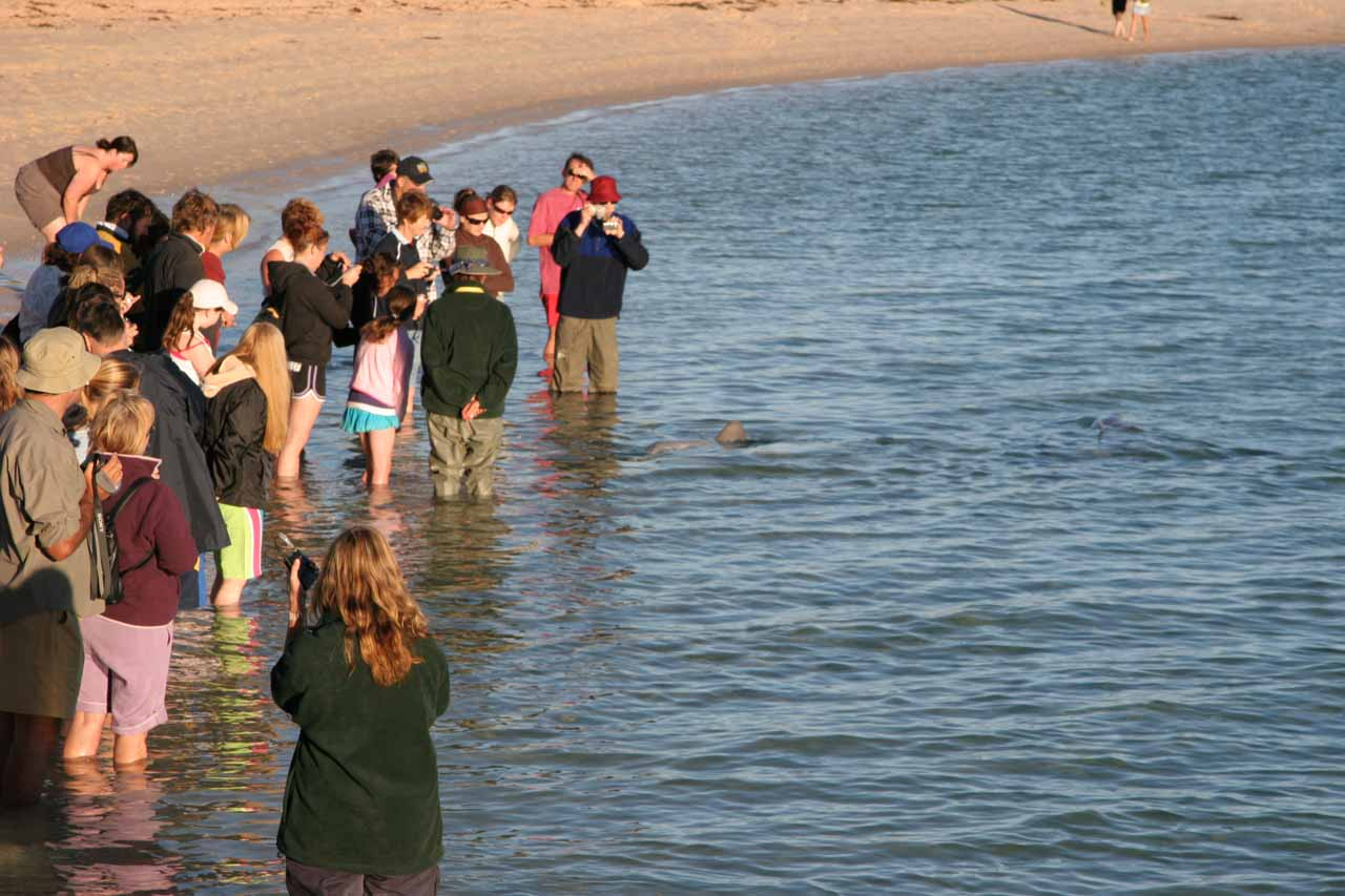 The crowd got larger as we got closer to the time of the dolphin feeding