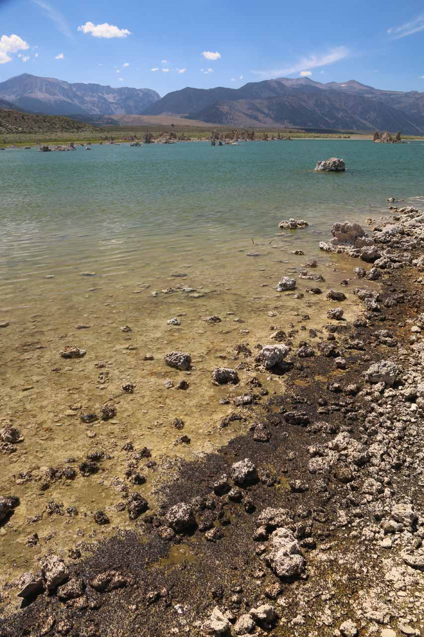 Lots of black alkali flies covering the shores of Mono Lake