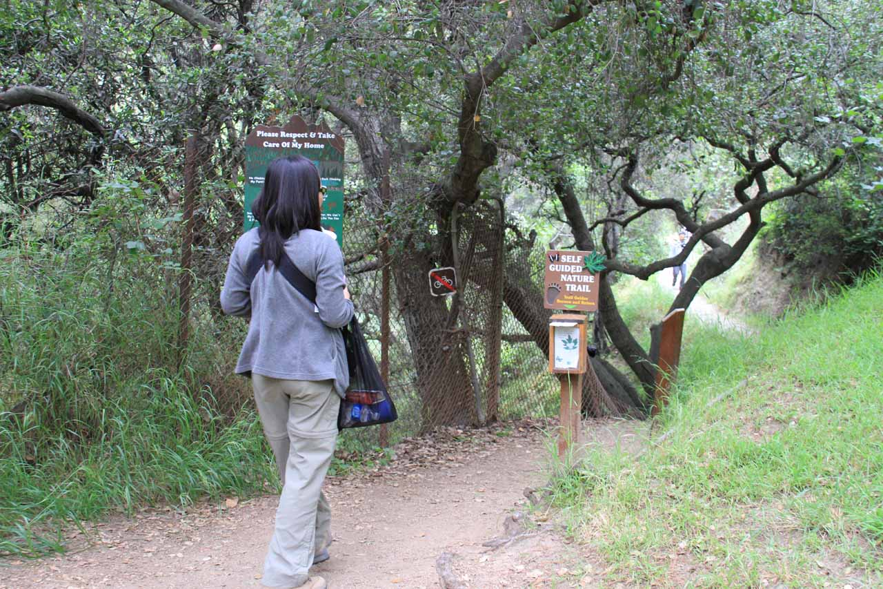 The trail starts beyond the picnic area
